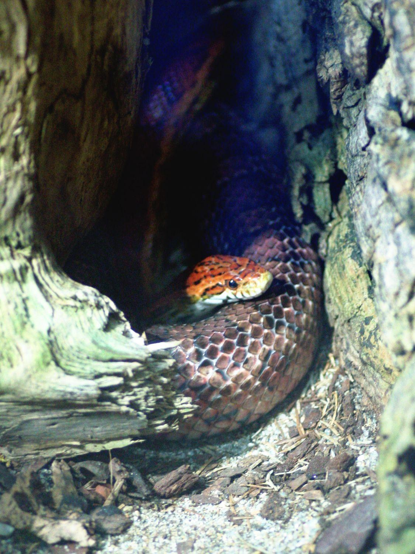 Bild mit Tiere, Schlangen, Reptilien, Seeschlangen