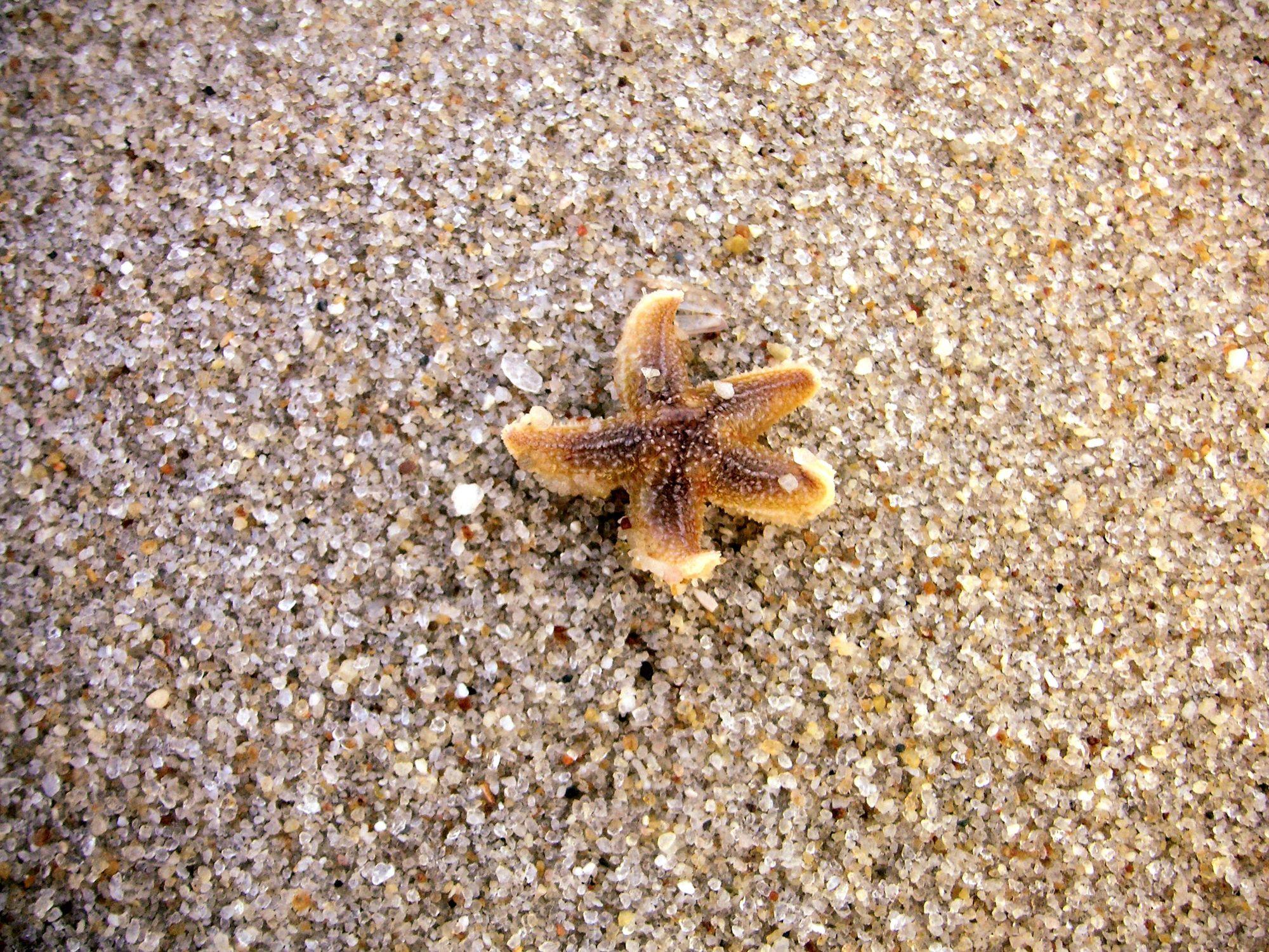 Bild mit Tiere, Materialien, Stein, Sand, Seestern, Sterne