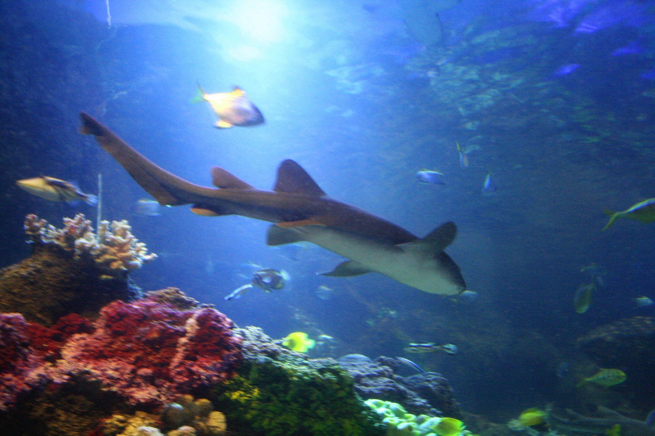 Bild mit Gegenstände, Tiere, Natur, Elemente, Wasser, Landschaften, Nesseltiere, Korallen, Fische, Fische, Unterwasser, Riffs, Aquarien, Krebse und Weichtiere