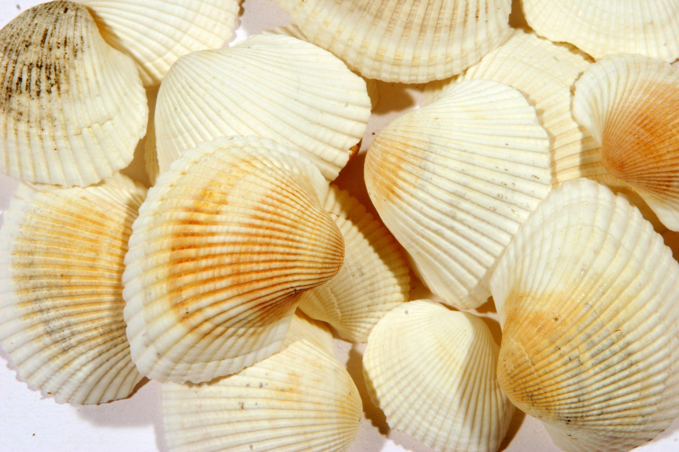 Bild mit Gegenstände, Lebensmittel, Essen, Muschel, Muscheln, Meeresmuschel, meeresmuscheln