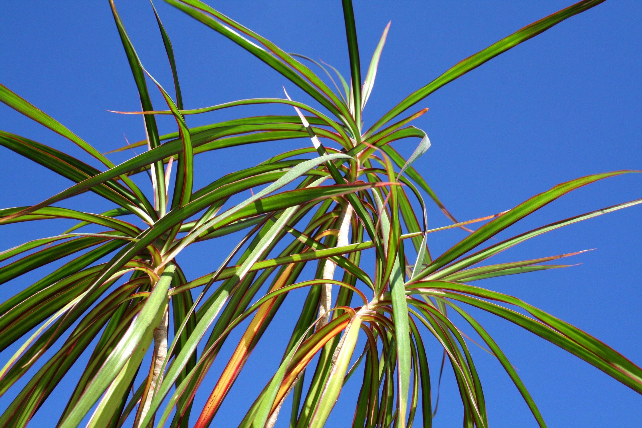 Bild mit Natur, Pflanzen, Gräser, Himmel, Bäume, Blumen, Palmen