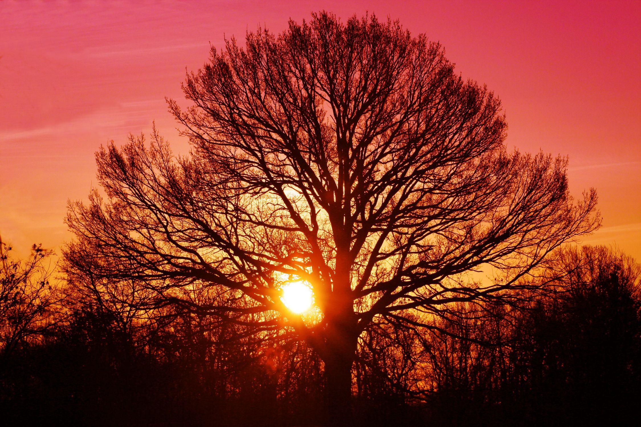 Bild mit Farben, Orange, Natur, Pflanzen, Landschaften, Himmel, Bäume, Wolken, Rot, Horizont, Sonnenuntergang, Sonnenuntergang, Sonnenaufgang, Abendrot, Morgenrot, Wald, Baum, Baum, Eiche, Tree, Trees, Sonnenschein durch eine Baumkrone