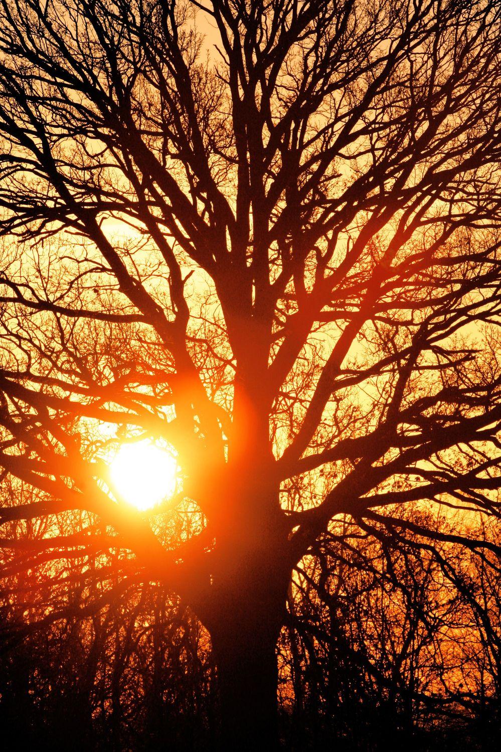 Bild mit Farben, Orange, Natur, Pflanzen, Landschaften, Himmel, Bäume, Sonnenuntergang, Sonnenuntergang, Sonnenaufgang, Abendrot, Morgenrot, Wald, Baum, Eiche, Tree, Trees, Sonnenschein durch eine Baumkrone
