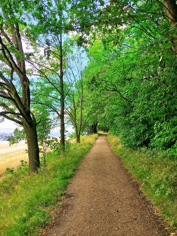 Bild mit Grün, Bäume, Wälder, Laubbäume, Wald, Lichtung, Baum, Waldweg, Baumstamm, Landschaft, Forest, Laubbaum, Nature, Tree, Laubwald, Laubwälder, Spaziergang, Spazierweg, Wanderweg