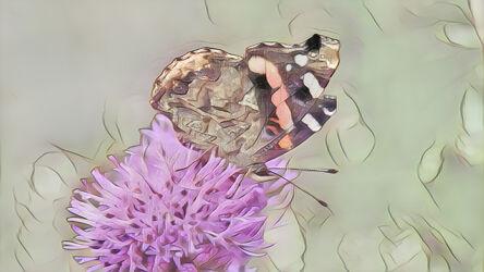 Bild mit Kunst, Natur, Pflanzen, Tier, Blume, Makro, Distel, Schmetterling, Insekt