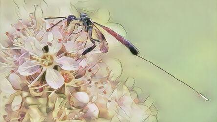 Insekt auf Fiederspiere