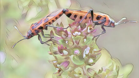 Käfer, Zweisamkeit auf Blüte