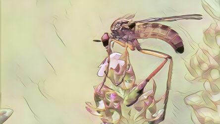 Fliege beim Naschen