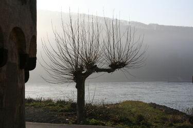 Bild mit Gewässer, Nebel, Baumkrone, Baum, Morgentau, Morgenstimmung, Fluss, Nebelauflösung, Nebelwolken, flusslandschaft