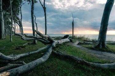 Bild mit Wasser, Bäume, Küsten und Ufer, Sonnenuntergang, Sonnenaufgang, Wald, Meerblick, Ostsee, Märchenwald, mystisch