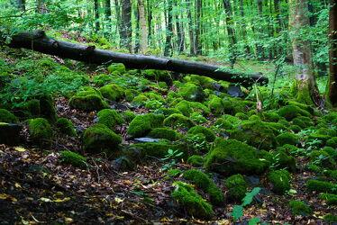 Bild mit Natur, Wald, Steine, summer, Moos