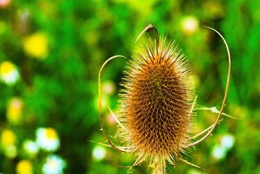 Bild mit Natur, Wiese, Wiesengras, Wiesen & Felder