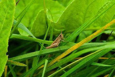 Bild mit Gräser, Gras, Grashüpfer