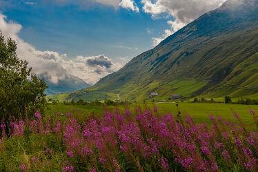 Bild mit Landschaften, Weiden und Wiesen, Blumen