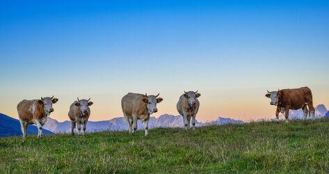 Bild mit Landschaften, Kühe, Berge und Almen