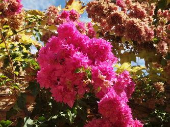 Blütenbracht