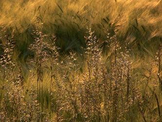 Bild mit Pflanzen