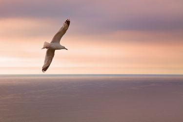 Bild mit Tiere, Natur, Sonnenuntergang, Sonnenaufgang, Vögel, Vögel, Fliegen, Strand, Meer, Tier, Möve, Am Meer, Möven