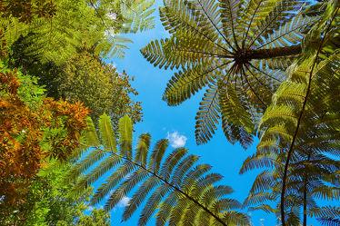 Bild mit Natur, Natur, Grün, Himmel, Bäume, Blau, Sommer, Struktur, Wald, Wald, Baum, Blätter, Hintergrund, Pflanze, Blatt, Park, farn, Schönheit, Wolke, Umwelt, Hell, Baumfarn, Jahreszeit, Regenwald, Outdoor, Neuseeland, oben, Australien, Azoren, schön, Botanik, Zweig, Dschungel, Jura