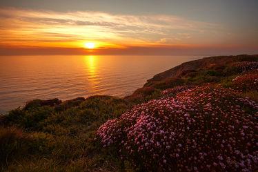 Bild mit Natur, Gewässer, Blumen, Strände, Sonnenuntergang, Sonnenaufgang, Strand, Meer, Blume, Nature, Wiese, Küste, Weide, Weiden