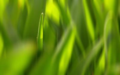 Bild mit Natur,Grün,Makro,Gras,Grashalm