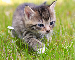 Bild mit Tiere, Haustiere, Katzen, Tier, Katze, Kater, hauskatze, heimkatze