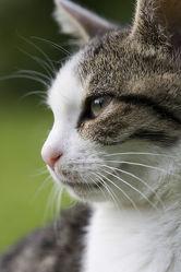 Bild mit Tiere, Katzen, Tier, Katze, Kater