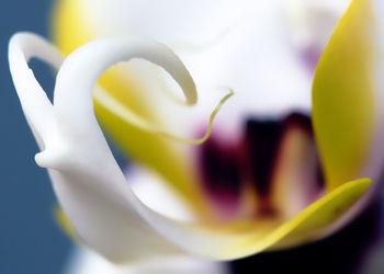 Orchideen Makro Fotoposter