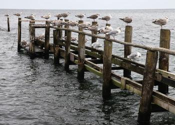 Bild mit Vögel, Möwen, Ostsee, Meer, Möwe, Möve, Ostseebilder, Bilder, Möven