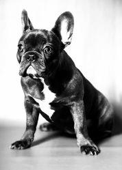 Bild mit Tiere,Haustiere,Hunde,Tier,Hund,schwarz weiß,SW