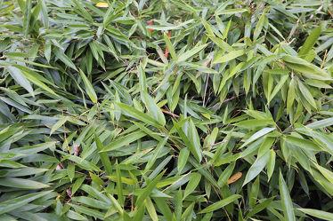 Bild mit Natur, Pflanzen, Bambus, Blätter, Pflanze, Blatt, Bambusmotiv, Bambusblatt, Bambusblätter