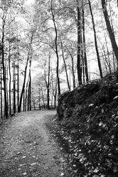 Bild mit Bäume, Laubbäume, Wald, Baum, Laubbaum, schwarz weiß, Laub, SW, Naturfoto