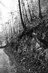 Bild mit Natur, Bäume, Wälder, Wald, Baum, schwarz weiß, SW