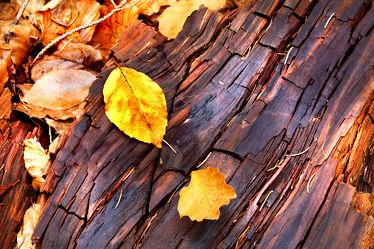 Bild mit Wälder, Holz, Herbst, Wald, Holzstruktur, Blätter, Blatt, Laubblatt, Laubblätter, Laub