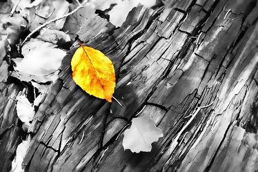 Herbstlaub in buntem Grau