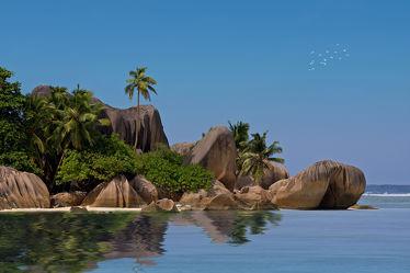 Bild mit Natur, Gewässer, Urlaub, Palmen, Strand, Meer, Palme, Insel, island, ozean, Seychellen