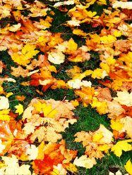 Bunter Herbst Teppich
