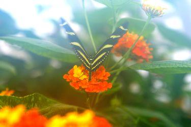 Schmetterling im Nebel