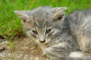 Eine Handvoll Katze