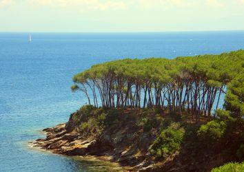 Baumgruppe am Meer