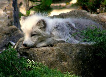Bilder mit Bunte Tierwelt