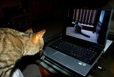 Bild mit Tiere, Haustiere, Katzen, Tier, Katze, Katzenbilder, Tierwelt, Kater, Haustier