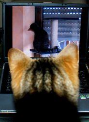 Katze sieht sich selbst...