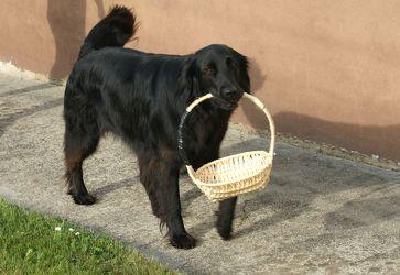 Hund mit Korb