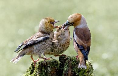 Bild mit Tiere, Vögel, Vögel, Flügel, Tier, Gefieder, Tierwelt, Jungvögel, Fütterung