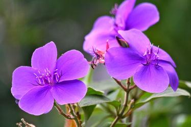 lila lila lila
