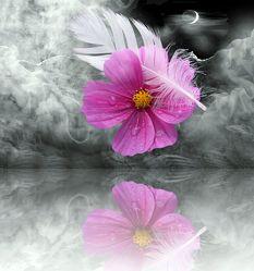 Bild mit Pflanzen, Himmel, Wolken, Reflexion, Blumen, Sonnenuntergang, Fliegen, Nebel, Sonne, Blume, Pflanze, Abstrakt, Spiegelung, Floral, Stilleben, cosmea, Florales, Abstraktes, blüte, blüte, Feder