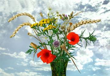 Bild mit Wasser, Pflanzen, Reflexion, Blumen, Blume, Pflanze, Wassertropfen, Spiegelung, Floral, Stilleben, cosmea, Blüten, Florales, blüte, Kugel