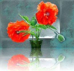 Bild mit Pflanzen, Reflexion, Blumen, Mohn, Blume, Pflanze, Mohnblüte, Spiegelung, Floral, Stilleben, Blüten, Florales, blüte, Blumenvase