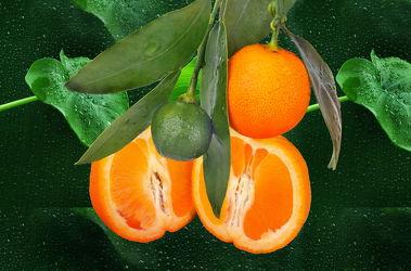 Bild mit Orange, Zitrusfrüchte, Orangen, Frucht, Küchenbild, Food, Küchenbilder, KITCHEN, Küche, Küchen, zitrusfrucht
